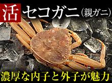 活セコガニ(親ガニ)