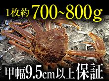 活(生)松葉ガニ(約700~800g・甲幅9.5cm以上保証)