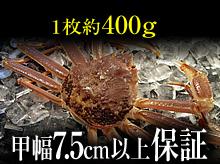 活(生)松葉ガニ(約400g・甲幅7.5cm以上保証)
