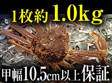 活(生)松葉ガニ(約1kg・甲幅10.5cm以上保証)