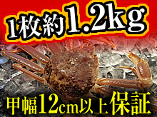 活(生)松葉ガニ(約1.2kg・甲幅12cm以上保証)