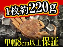 活セコガニ(220g・甲幅8cm以上保証)