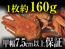 茹でセコガニ(160g・甲幅7.5cm以上保証)